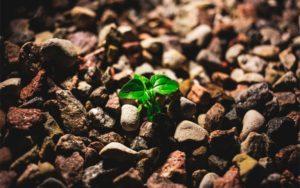 Seed money: o que é, como funciona e riscos envolvidos